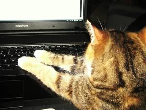 Lissy hilft am Notebook